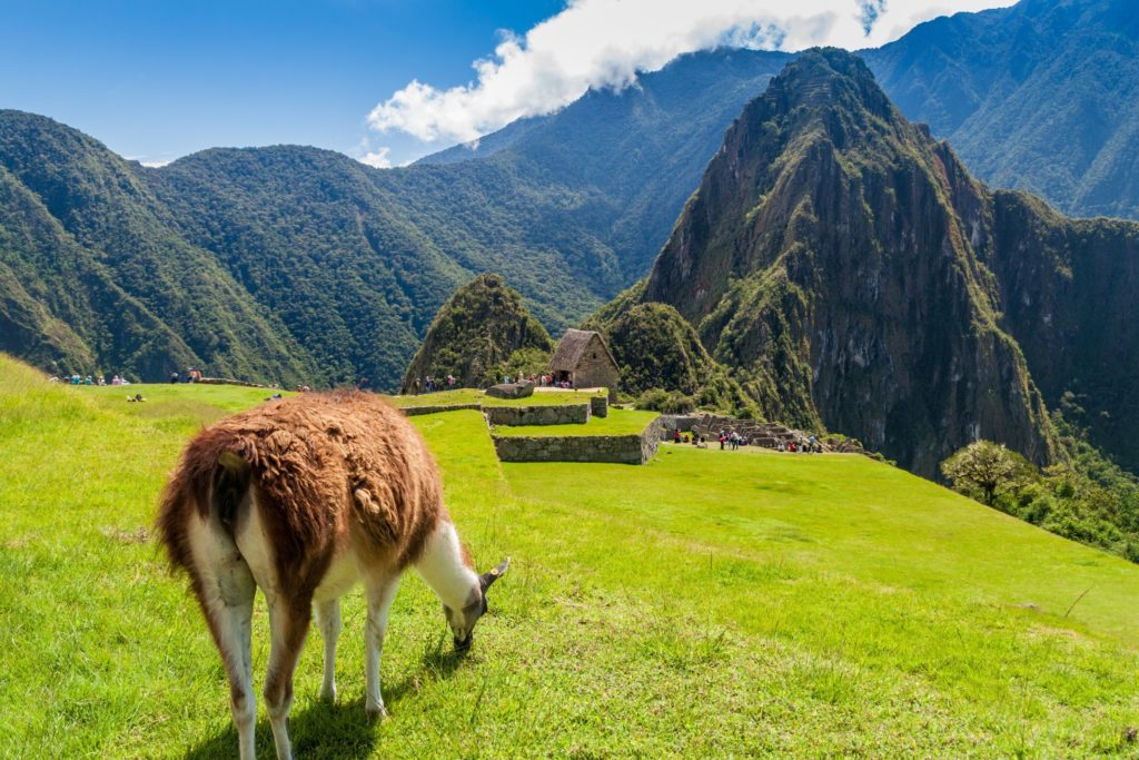 Peru Mountains grazing